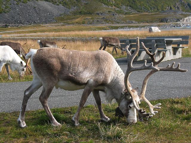 norwegia7