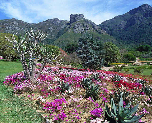 southafrica6